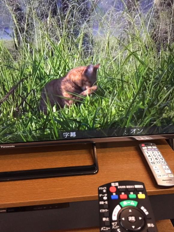 このテレビの場合は画面右下に「オン」と表示されるのでそこで確認します