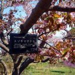 田舎者の憧れ。地下鉄とか富士山とかソメイヨシノとか。
